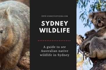 Sydney Wildlife Tours