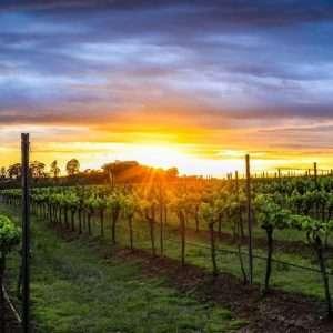 Sydney Wine Tours